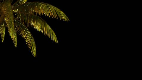 The branch of palm, palm tree in the wind. With alpha channel. File format - mov. Codeck-PNG+Alpha