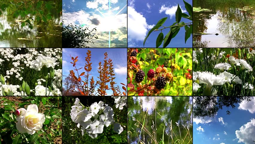 Four Seasons Nature Collage Stock Image - Image: 15808041