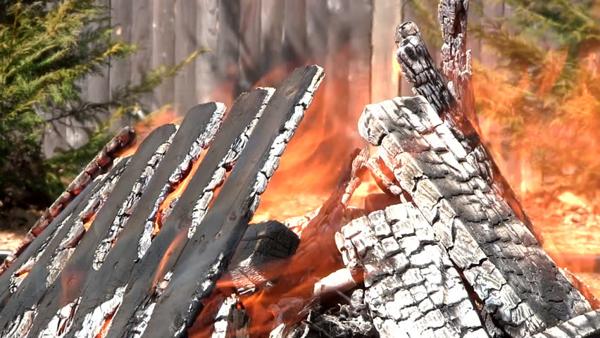 Close-up of excess lumber burning in fire pit with backdrop of Leyland cypress's against fence on sunny day