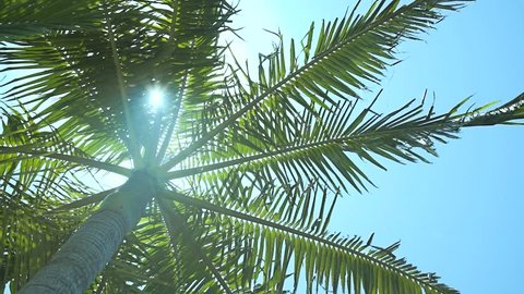 Looking up at palm tree with sun shining through