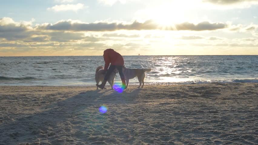 girl playing with siberian husky dogs on beach...
