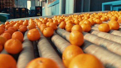 Tangerines In Refinery Factory6