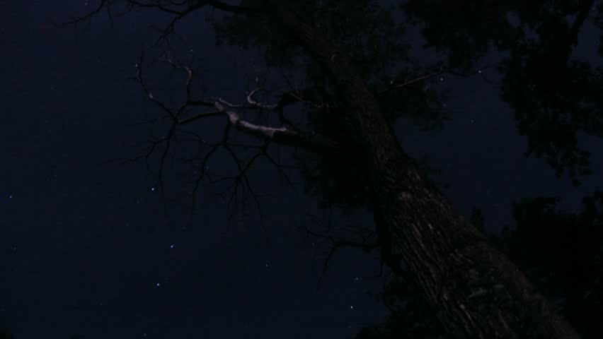 Timelapse Of Stars And Old Tree.   HD Stock Footage Clip