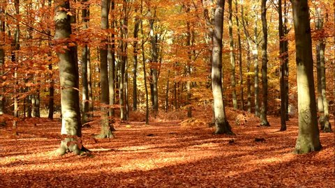 Colorful autumn forest with falling leaves