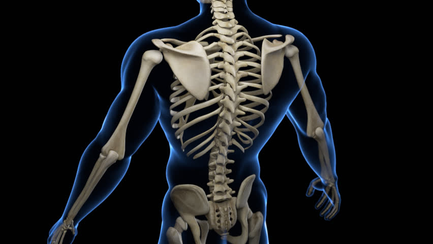 Complete close-up view of the Skeletal System with transparent body in blue and black background. Camera rotation from the top to the bottom, showing all the bones.  Alpha channel included in the mov. | Shutterstock HD Video #22335262