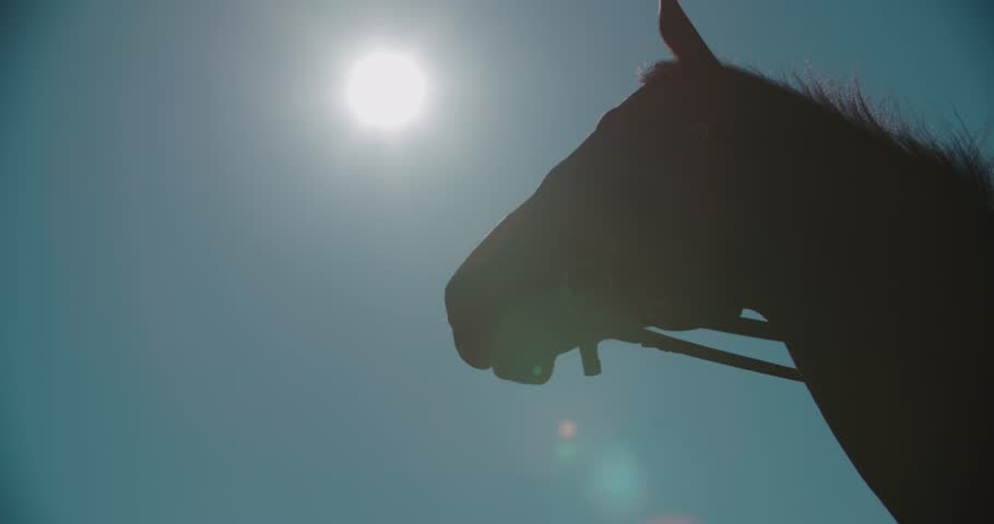 silhouette of a thoroughbred racing stallion horse close-up in slow motion