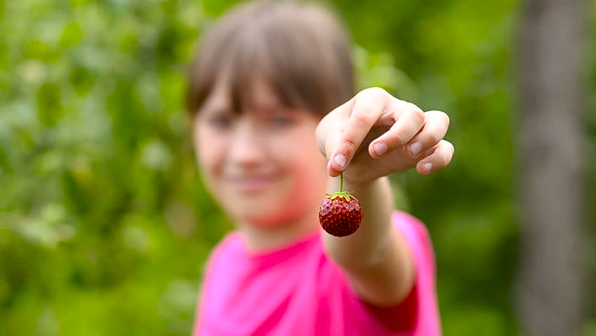 Strawberries, red, ripe, tasty, holding a girl on the plantation and laughs. Harvest season and red sweet strawberries