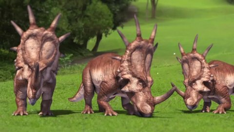 Group of Styracosaurus Triceratops Eat Dinosaurs Jurassic