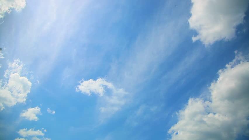 bird flies in the sky