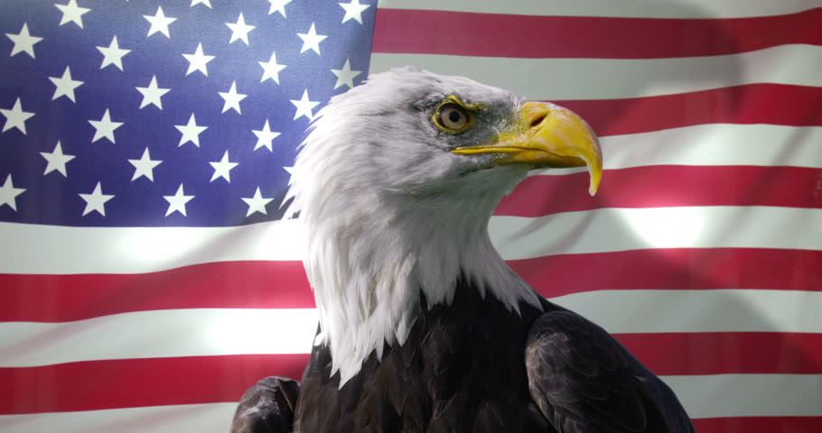 4K Close up of American Bald Eagle against animated background of American flag Dec 2016-UK #22798282