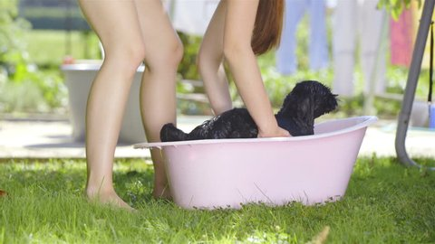 Cute black dog shake of water after bath in pink bathtub 4K. Long shot of black dog removed from bathtub in focus. Person lift and put on grass. Water spry all around. Clothes in background drying.
