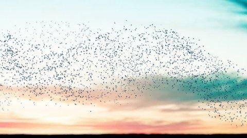Flock of birds flying across a sunset sky