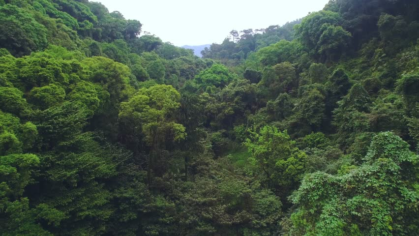 Tropical forest aerial view | Shutterstock HD Video #23373562