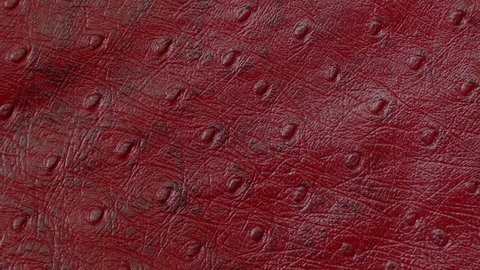 Texture genuine leather close up, embossed under skin dark red ostrich, background. Dolly Right Left