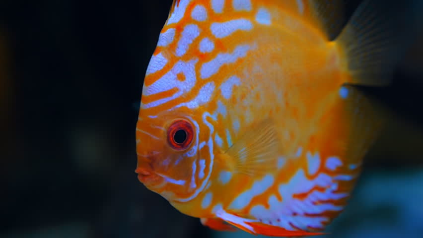 exotic fish wallpaper Collection (74 )