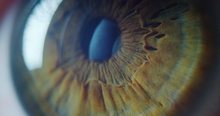 perfect green eye macro in a sterile environment and perfect vision in resolution  #23655922