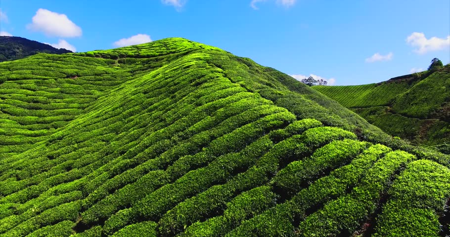 beautiful landscape of the tea plantations, mountain and the river ...
