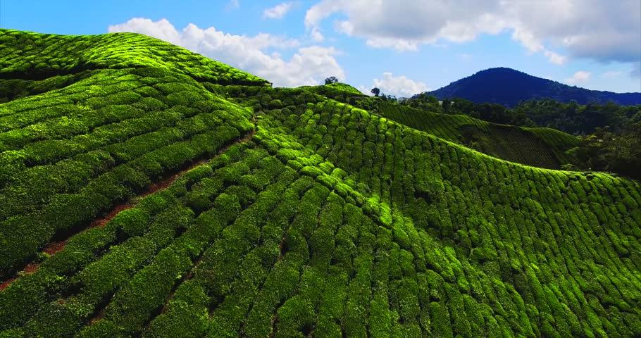 Tea Plantation In Sri Lanka. Beautiful Landscape Stock Photo ...