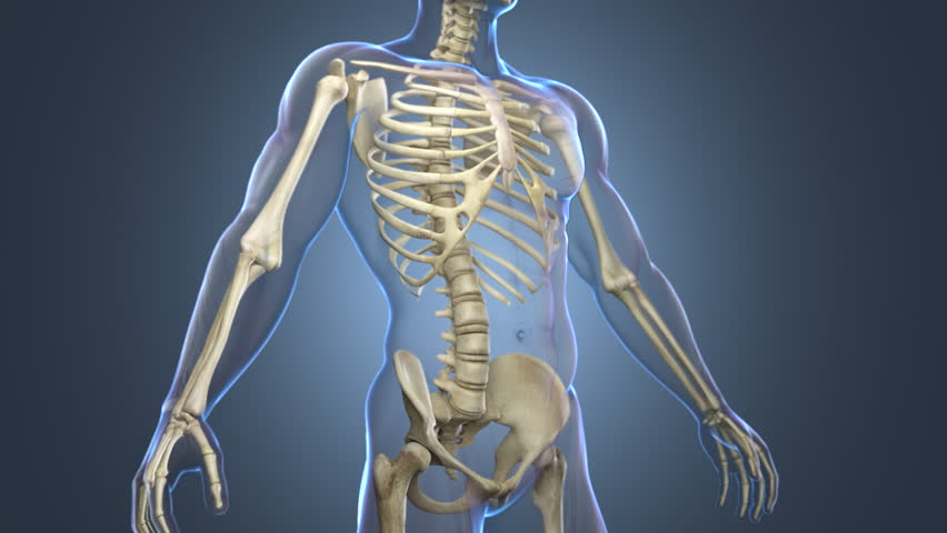 animation close-up showing all the parts of the skeletal system, Skeleton