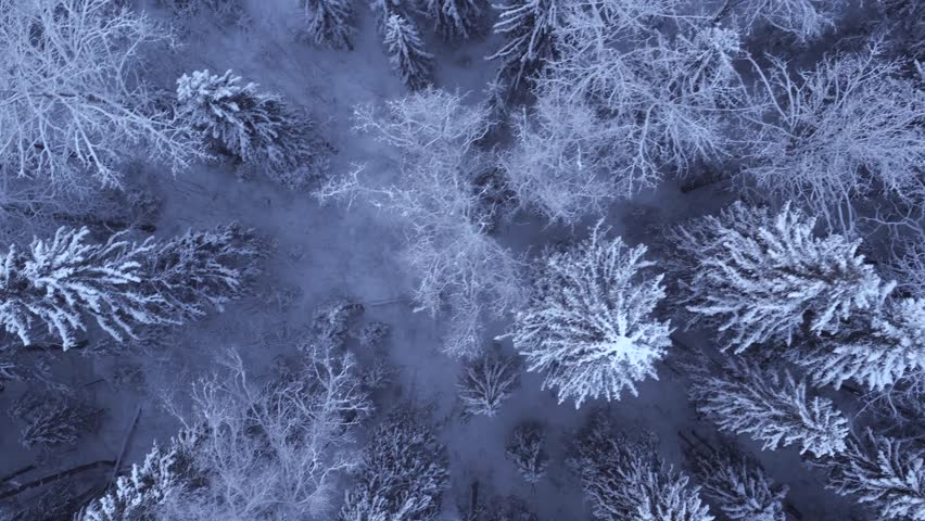 Top view of the snow-covered trees in the forest | Shutterstock HD Video #23730442