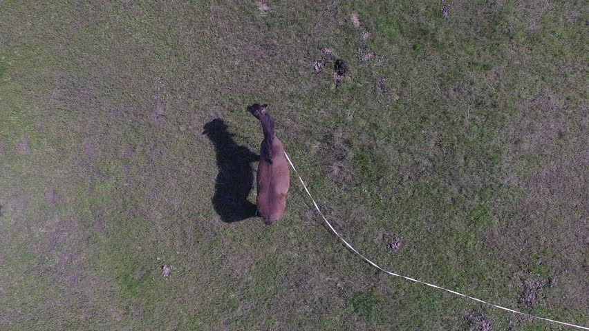 Aerial view of horse standing on a green field. Video 4k | Shutterstock HD Video #23766412