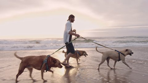 4k Happy young man running/walking with dogs on beach lifestyle steadicam shot at sunrise.