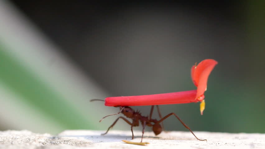 Tropical Work Ants marching with flowers and leaves
