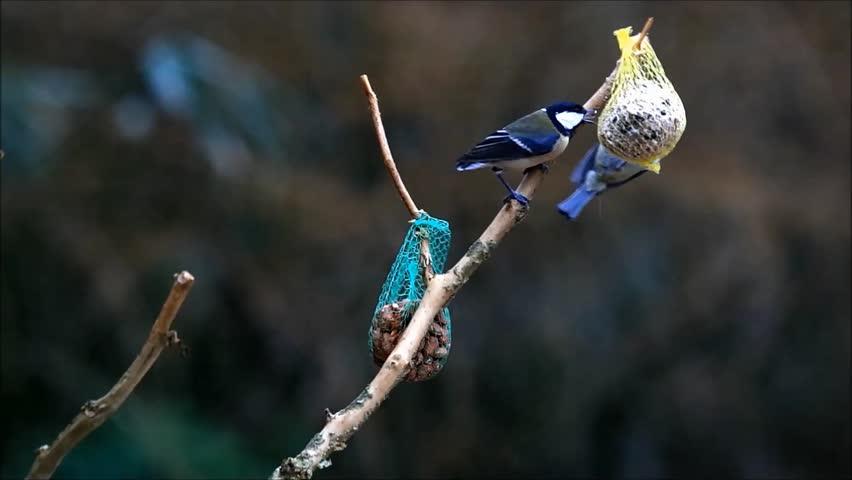 Feeding wild birds in winter   | Shutterstock HD Video #23948032