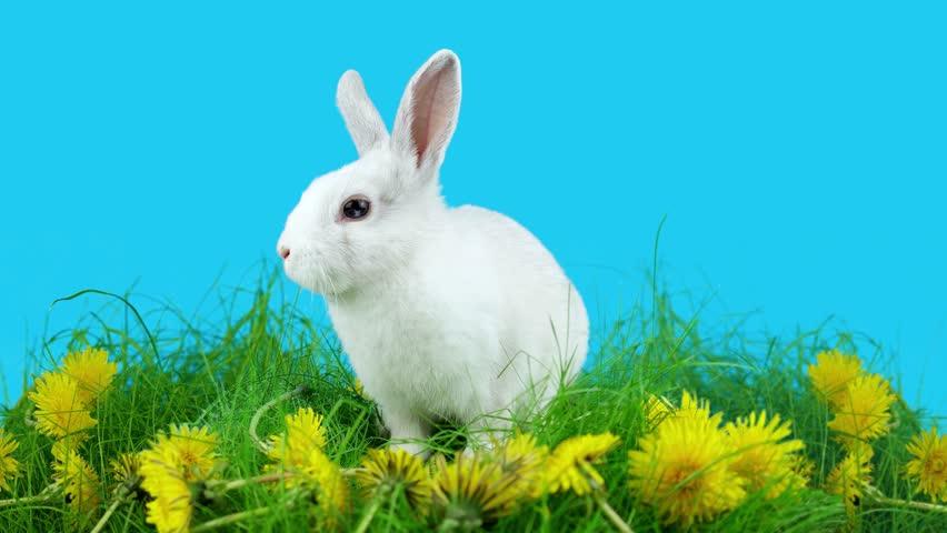 bunny rabbit sniffing around - photo #39