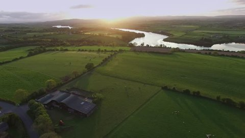 view over a running cattle through a green field in the Lee Valley, Co Cork, Ireland. River Lee and Farran Woods in the background