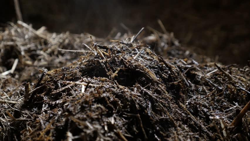 Animal feces and organic bedding straw in the barn 4K 2160p 30fps UltraHD footage - Heat evaporates from nitrogen rich soil fertilizer 3840X2160 UHD video