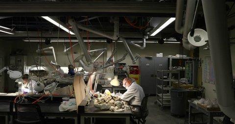 SALT LAKE CITY, UTAH - FEB 2017: Dinosaur paleontologist study fossil bones. Scientific study ancient life, fossils and evolution. Science biology geology. Evolution of historical life.