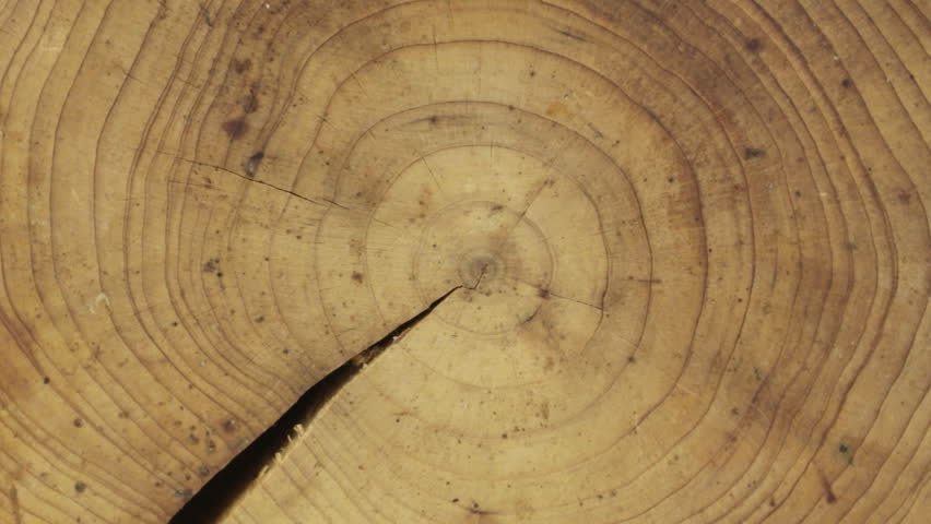 Close-up of a cross-section of a tree trunk, rotation, isolated on a green screen.