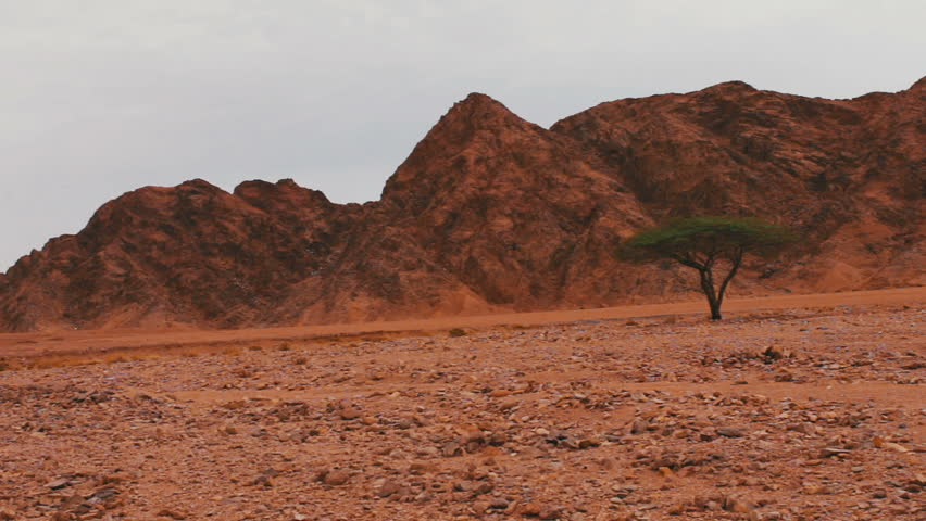 Red desert landscape of Sinai Mountains and young lone green tree