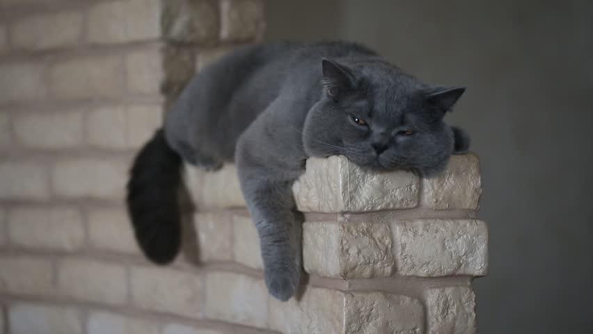 Header of lazy