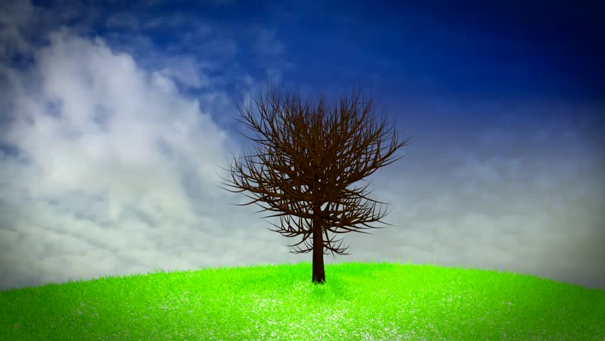 Four seasons tree time lapse loop