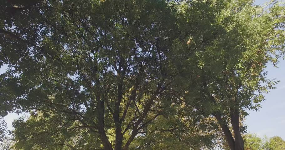 Walking under trees on walkway in urban city park or woods in summer sunny day. 4k POV forward low angle shot | Shutterstock HD Video #24672692