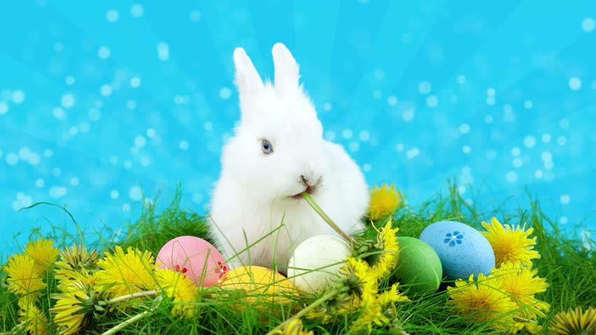 Happy Easter Greeting Card With Stock Footage Video (100