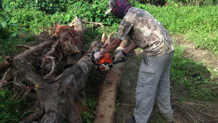 cutting trees What are the cons of cutting down trees what are the pros and cons of cutting down pine trees what are some reasons humans cut down trees how does it affect our.
