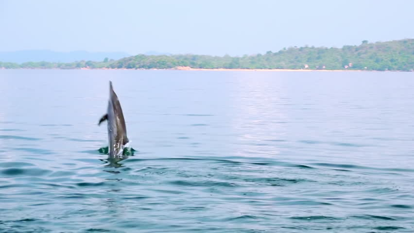 Spinner Dolphin (Stenella longirostris) making leap in air. Amazing marine animal performing spectacular trick. Sea carnivore hunting for tuna fish in morning. Sri Lanka. Long shot. Slow motion. | Shutterstock HD Video #25163072