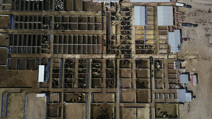 Metal Corrals And A Feed Bunk Enclose Several Breeds Of
