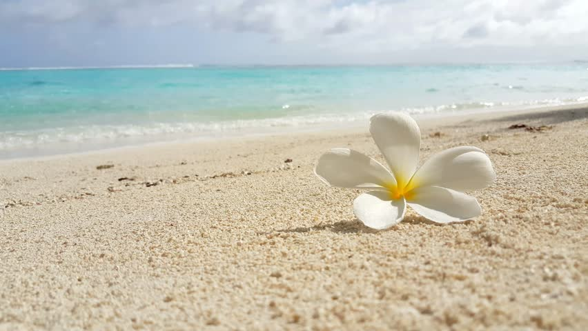 v00451 Maldives beautiful beach background white sandy tropical paradise island with blue sky sea water ocean 4k yellow flower