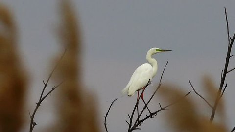 egret sits on a tree and flies up