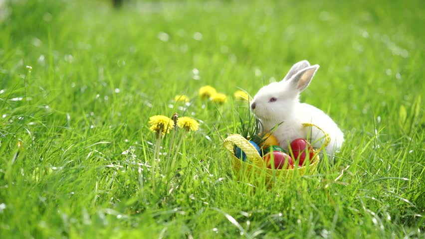Easter white bunny on the grass