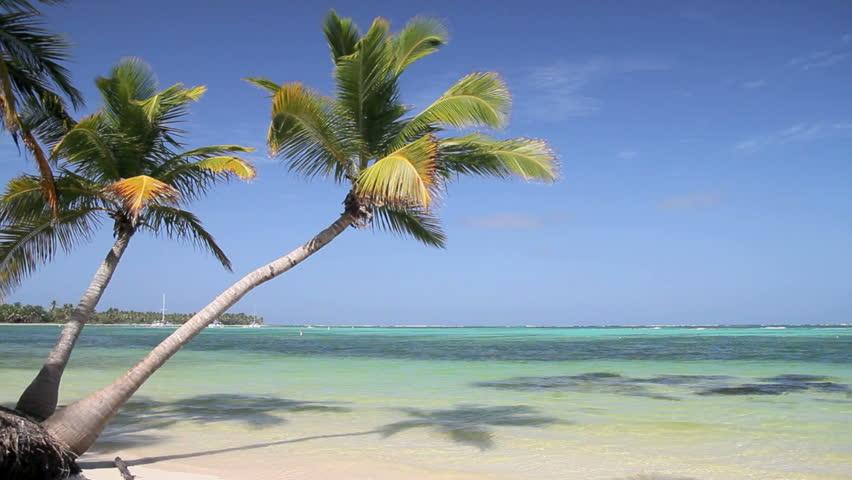 how to draw coconut tree scene