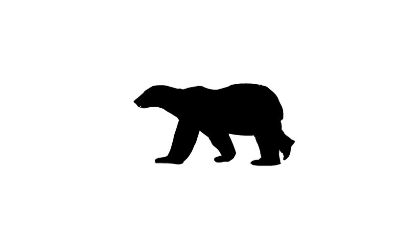 Bear Walking On A White Background Stock Footage Video ...