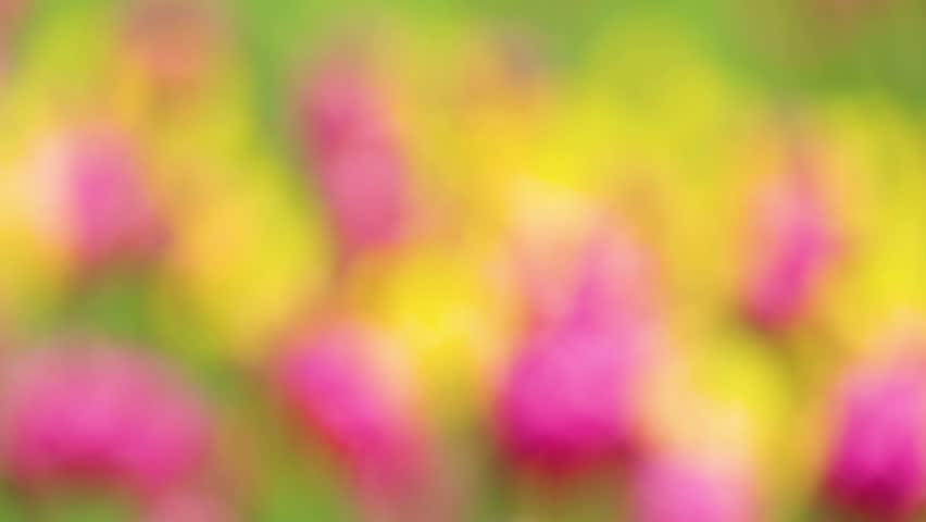 Unduh 580 Background Pink Yellow Hd Gratis Terbaru