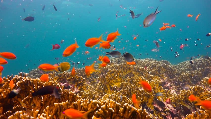 Colorful coral reef. Exciting diving off the island of Mafia. Tanzania. Of the Indian ocean. | Shutterstock HD Video #26473232