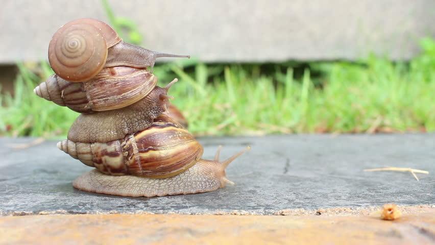 Header of gastropod