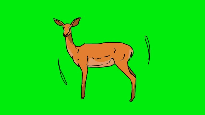 hand-drawn gazelle on a green screen #26681902